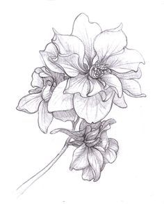 larkspur tattoo - Google Search