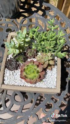 Succulent Outdoor, Succulent Wall Planter, Succulent Bowls, Succulent Gardening, Succulent Arrangements, Planting Succulents, Succulent Display, Succulent Ideas, Suculentas Diy