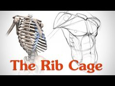 Anatomy of the Rib Cage by Stan Prokopenko*  • Blog/Website   (http://www.proko.com) • Online Store   (http://www.proko.com/store-drawing-and-painting-resources)  ★    CHARACTER DESIGN REFERENCES (https://www.facebook.com/CharacterDesignReferences & https://www.pinterest.com/characterdesigh) • Love Character Design? Join the #CDChallenge (link→ https://www.facebook.com/groups/CharacterDesignChallenge) Promote your art in a community of over 30.000 artists!    ★
