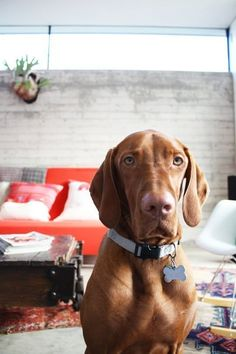 Tips for a Pet-Friendly Home