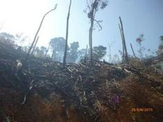 "Tombak Nagara: Catatan Kecil Rimbawan Asahan. ""Pembukaan Koridor Di Hutan Lindung Tormatutung Asahan Ancam Tutupan Hutan""."