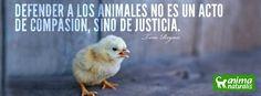 """""""Todos los animales son alguien. Alguien con una vida propia. Detrás de esos ojos hay una historia, la historia de su vida en su mundo como ellos lo experimentan. En nuestra cultura, nos han hecho pensar en los animales como cosas, como mercancía. El gran desafío yace en un cambio de percepción."""" Tom regan  www.AnimaNaturalis.org"""