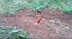 Cum scăpați de cârtițe – o metodă neobișnuită, dar eficientă! - Sfaturi pentru casă și grădină