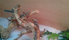 A guide on feeding baby Bearded Dragons from birth Bearded Dragon Diet, Pet Dragon, Baby Feeding, Reptiles, Birth, Pets, Animals, Dragons Den, Babies