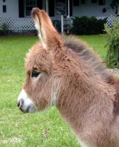 Must have a farm full of miniature donkeys