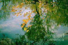Nature Abstract In Autumn - Natchez Trace by Debra Martz www.debramartz.com