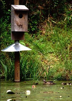 duck house | PLANS FOR WOOD DUCK HOUSES « Unique House Plans | lisa ...