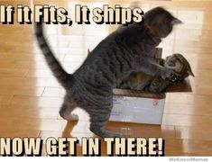 if-it-fits-it-ships-now-get-in-there