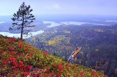 Autumn scenery from Fell Konttainen near Ruka, Kuusamo Finland Lappland, Lapland Finland, Autumn Scenery, City Landscape, Nature Pictures, The Great Outdoors, Wonders Of The World, Norway, Trip Advisor