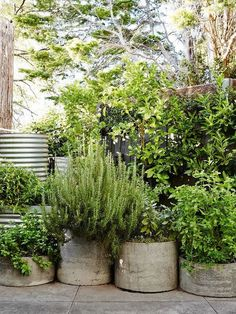 concrete herb planters Brian and Trish Perkins — The Design Files Container Herb Garden, Herb Planters, Herb Pots, Boxwood Planters, Big Planters, Container Flowers, Outdoor Plants, Outdoor Gardens, Plantas Indoor