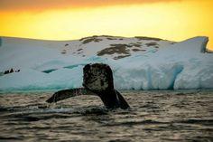 Sunset - Pleneau Island - Photo by Peter Toh — at Antarctica & South Georgia. #Antarctica #SouthGeorgia #AuroraExpeditions