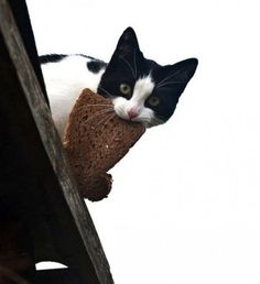 Cats thieves 9   Funny World