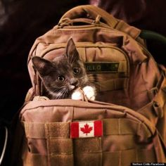 Nathan Cirillo's Dogs Wait For Master To Return | This photo-essay also has pics of his cat....