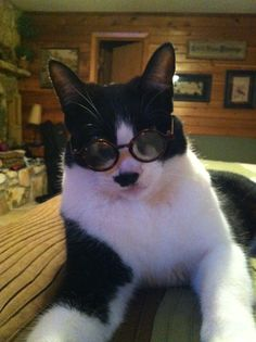 """Cats with glasses...""""Woody"""""""