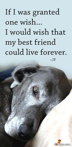 National Pet Memorial Day! Let's take time to reminisce and honor our beloved dogs who have touched our lives.