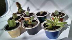 nespresso cup plant
