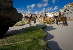 Straight from the horse's mouth : Gansbaai boasts the best horsepowered Joy Rides The Great White, Great White Shark, Shark Diving, Joy Ride, Fishing Villages, Adventure Awaits, Horse Riding, Tourism, Coast