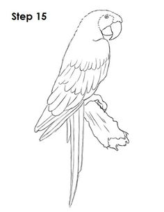 Coloriage d 39 un perroquet modelage animaux pinterest for Scarlet macaw coloring page