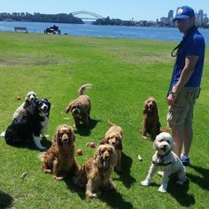 Pic with Quintin Roxy Amber Paddington & Buttons joined by Quintin's grandma Lucy uncle Ralph & little cousin Cupid   #cockerspaniels #englishcockerspaniel #redcockerspaniel #lhasaapso #lhasaapsox #cavoodle #bordercollie #dogs #dogsofsydney #sydneydogs #sydneydoggies #clarkespointreserve #huntershill #sydney #petcarer #petservices #dogwalking #sydneydogwalkers #dogwalkers #cutie #mobiledoggydaycare #topcaninemodels #dogofinstagram #posing #grouppic #mansbestfriends #doglovers #dogofinstagram…