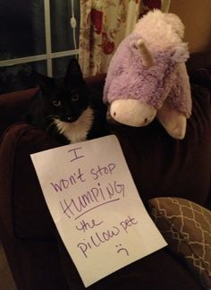 the-world_s-top-10-funniest-examples-of-cat-shaming-5.jpg (584×804)