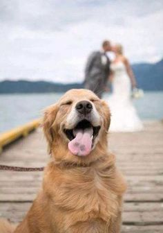 Don't you just hate it when that perfect special moment gets #dog photobombed!