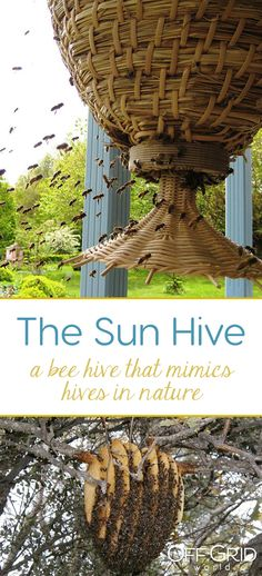 The sun hive: a majestically beautiful bee hive that could help save the bees