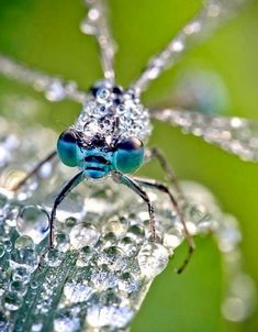 Stunning Macro Photographs of Insect Glowing in the Morning Dew | David Chambon photography