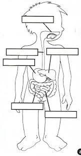 FREE Digestive System Worksheet www.homeschoolgiveaways