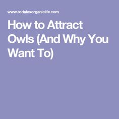 How to Attract Owls (And Why You Want To)