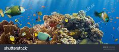 Coral And Fish In The Red Sea.Egypt Стоковые фотографии 130123160 : Shutterstock