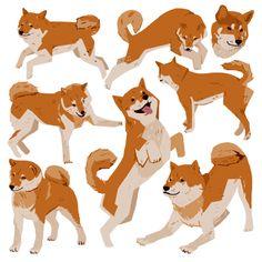 Shiba Inu Character Study