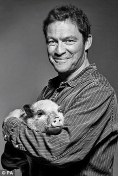 Mind if I snooze? Dozing off in the arms of actor Dominic West Sadie Frost, Dominic West, Mini Pigs, Cute Pigs, Toot, Animal Rights, Favorite Person, Sexy Men, Movie Tv