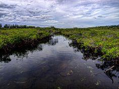 Mangrove canal by peterpateman on DeviantArt Rock Creek, National Parks, Deviantart, River, Island, Gold, Outdoor, Beautiful, Outdoors