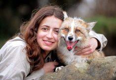 Todd es un zorro domesticado que fue rescatado cuando era un cachorro de 4 meses de nacido y fue criado como una mascota.