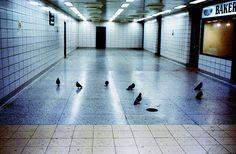Ahuyentar a las palomas del metro de Nueva York, pero sólo metiéndolas miedo