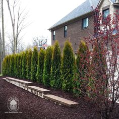 Looking for a natural screen? This is the way to go - quick, effective and beautiful. These newly installed arborvitae wishing you a Happy Arbor Day! #daalexander #loveyourlandscape #arborday #canton