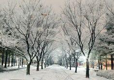 Winter in Namsan Park Korea