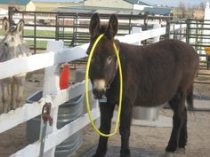 Inexpensive ideas for Donkey Toys!