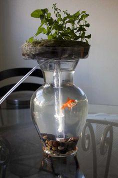 The Goldfish Garden aquaponic aquarium - Imgur
