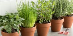 Herb Garden In Kitchen, Kitchen Plants, Herb Guide, Best Herbs To Grow, Cooking With Fresh Herbs, Growing Herbs Indoors, Types Of Herbs, Spring Flowering Bulbs, Organic Seeds