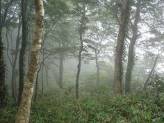 Bards In The Woods: Shinrin Yoku, Forest Bathing, in Ireland.