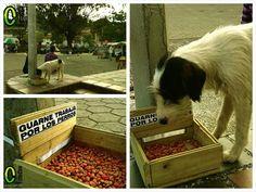 Estos son los comederos para los perros callejeros de Guarne. ¡Qué buena iniciativa!  Via @ContactoMedios pic.twitter.com/sYUQVCGgBt