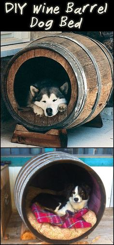 This Dog Bed is Made From Repurposed Wine Barrel, And is Solid Enough to Survive a Life Time