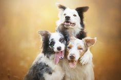 Este Fotógrafo Polonês Tirou As Fotos De Cães Mais Bonitas De Todas