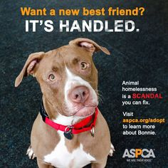 Fans of ABC's Scandal will love our latest adoptable promo! Bonnie waits for you ... she watches for you ... by the kennel door. She's looking for a life-changing, extraordinary love. Once she finds it, she'll be the love of your life. Click to view all of the adorable Scandal-themed photos! #Scandal