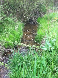 Beautiful acreage located in southwest Coshocton County with nice stream, great wildlife-filled woods flat open building site. Land For Sale, Ohio, Woods, Wildlife, Flat, Nice, Building, Nature, Beautiful