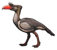 Kelenken | Kelenken, Middle Miocene, 15 million years ago, Argentina.