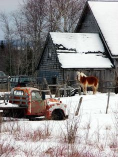 The horse barn. I like being in the country. There is a lot of scenery to enjoy. This old truck has charm all its own. Love the horse with its winter coat on!