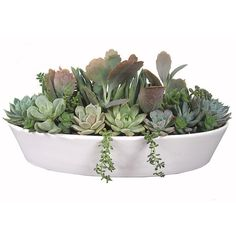 "Pastel Succulent Garden 13"" White Boat-shaped Ceramic Pot Dish Garden... (1.595 ARS) ❤ liked on Polyvore featuring plants, fillers, flowers, nature, home and backgrounds"