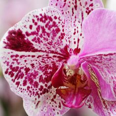 Four things that are not a threat to your orchid but appear to be. The next time you notice a problem with your plant, take a second look.